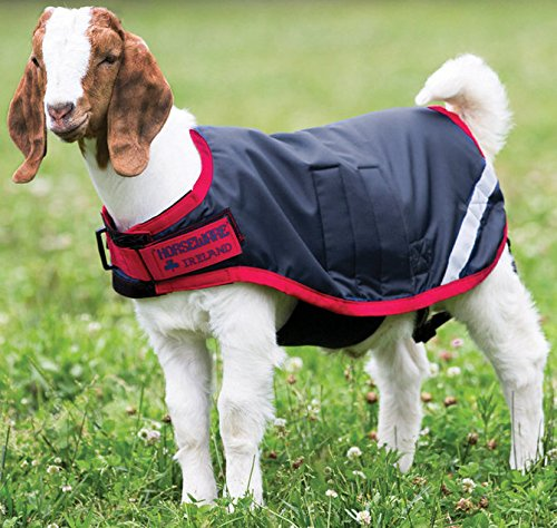 Horseware Goat Coat - Size:Large Color:Navy/Red by Horseware