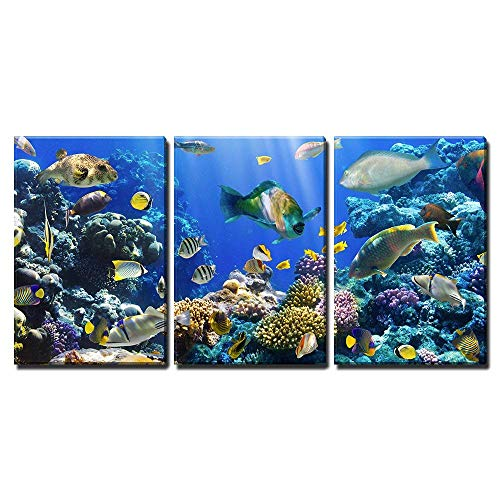 wall26 - 3 Piece Canvas Wall Art - Coral and Fish in The Red Sea Egypt - Modern Home Decor Stretched and Framed Ready to Hang - 24
