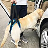 Dog Harness Support, Kobwa Dog Mobility Lift Support Harness for Hip Assist Stability Injured Disabled Arthritis Joint Pain Elderly(XL Size)