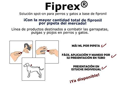 Pipetas para perros de 20kg a 40kg (12unidades): Amazon.es: Productos para mascotas