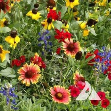 Outsidepride Texas/Oklahoma Wildflower Seed Mix - 5 LB