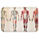 horse muscle chart - VROSELV Custom Door MatHuman Anatomy Vintage Chart of Body Front Back Skeleton and Muscle System Bone MasGraphic Ruby Cream