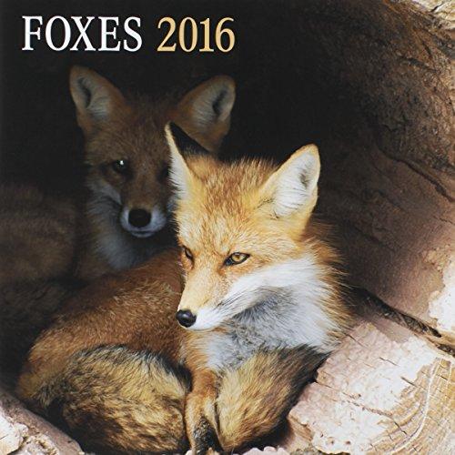"DaySpring 12"" x 12"" 2016 12-Month Wall Calendar, Foxes (74245)"