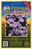 Everwilde Farms - 2000 Prairie Aster Native Wildflower Seeds - Gold Vault Jumbo Seed Packet