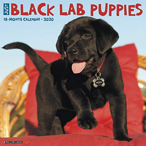 Just Black Lab Puppies 2020 Wall Calendar (Dog Breed Calendar)