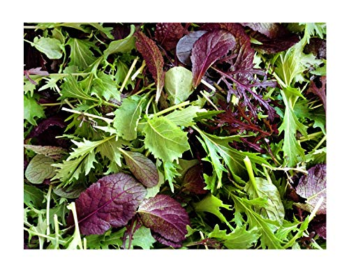 1000+ Mustard Mix Seeds ORGANICALLY Grown 15 Varieties Non-GMO Delicious and Healthy, Grown in USA. Perfect for Salad, Baby Greens or - Baby Greens Salad
