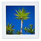 3dRose Danita Delimont - Trees - Spain, Canary Islands, Lanzarote, Tahiche, garden - 22x22 inch quilt square (qs_257883_9)