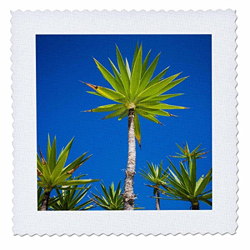 3dRose Danita Delimont - Trees - Spain, Canary Islands, Lanzarote, Tahiche, garden - 22x22 inch quilt square (qs_257883_9) by 3dRose