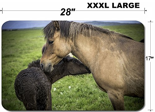 Luxlady Large Table Mat Non-Slip Natural Rubber Desk Pads IMAGE ID: 34171621 An Icelandic horse with her newborn foal