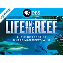 Life on the Reef