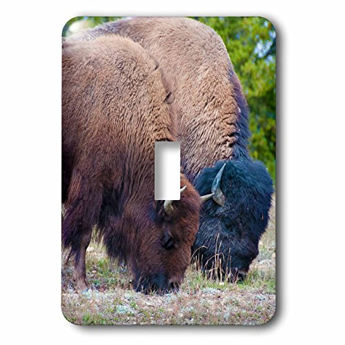 Bison Grass - 3dRose Jos Fauxtographee- Bison Black and Brown - Two Bison grazing on grass in Yellowstone one tan and black - Light Switch Covers - single toggle switch (lsp_263423_1)