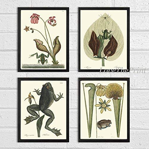 Frog Art Print SET of 4 Beautiful Antique Frogs Amphibian Tropical Flowers Botanical Lake River Nature Natural Science Illustration Room Wall Home Interior Decor to Frame Unframed ()