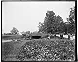 Vintography 8 x 10 Ready to Frame Pro Photo of Pansy Bed Belle Isle Park Detroit 1900 Detriot Publishing 84a