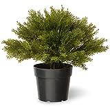 National Tree 15 Inch Globe Juniper in Green Pot (LCB4-15-1) Review