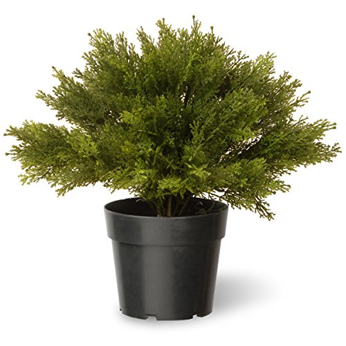 national-tree-15-inch-globe-juniper-in-green-pot-lcb4-15-1