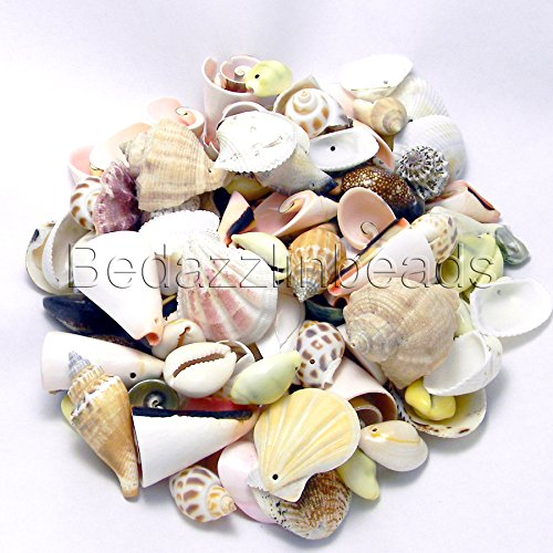 1 Pound Assorted Whole Shell Seashell Charms and Beads with Drilled Holes