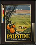 Photo: Visit Palestine, See Ancient Beauty Revived, Oranges, Palm Fronds, Farmland, Mountain . Size: