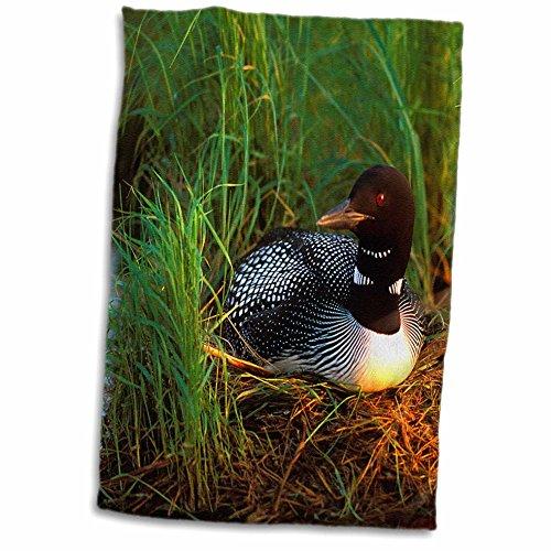 3D Rose Minnesota-Common Loon Bird-Leech Lake-Us24 Pha0015-Peter Hawkins Hand/Sports Towel, 15 x 22 ()