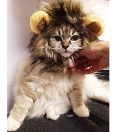 [Lion Mane Wig Cat Costume and Small Dog Costume with Complimentary Feathered Catnip Toy Brown Headwear Hat with Ears for Halloween,] (Costumes For A Cat)