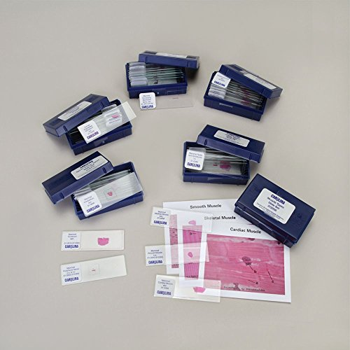 Tissue Types Microscope Slide Set