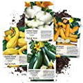Seed Needs Collection Of 4 Individual Summer Squash Seed Packets Cucurbita Pepo Non Gmo Seeds