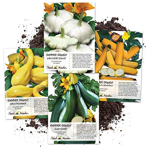 Seed Needs Collection 4 Individual Summer Squash Seed Packets (Cucurbita Pepo) Non-GMO Seeds