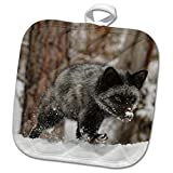3dRose Danita Delimont - Foxes - Silver Fox a melanistic form of the red fox, Montana - 8x8 Potholder (phl_279177_1)