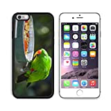 MSD Premium Apple iPhone 6 Plus iPhone 6S Plus Aluminum Backplate Bumper Snap Case Male Indonesian Eclectus Parrot Feeding Image ID 27345664