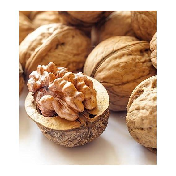 Ancy Brings Kashmiri shelled sabut Walnuts (Special Quality) 1kg (Pack of 4x250)