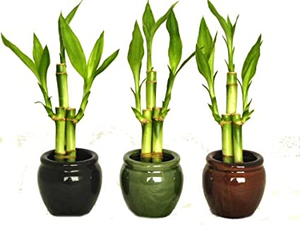Amazon Kl Design Import 3 Colors Bamboo Style Mini Ceramic