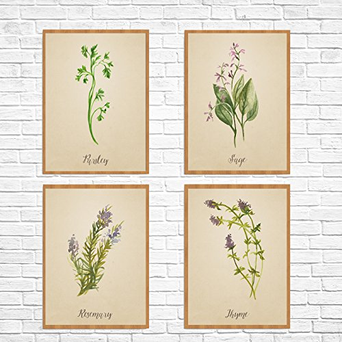 Herb Art Herb Card Set : Parsley Sage Rosemary and Thyme Herb Card Collection Set of 4 Cards and Colorful Envelopes