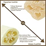 All Natural Loofah Sponge, Set of 3 Real Egyptian