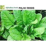 Splendour Seeds Palak Seeds Spinach - Around 100 Seeds