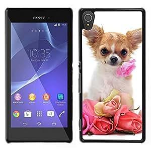 Caucho caso de Shell duro de la cubierta de accesorios de protección BY RAYDREAMMM - Sony Xperia T3 - Chihuahua Rosas San Valentín perro de mascota