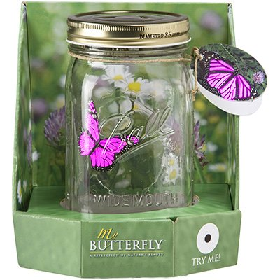 11cc84d056414 Butterfly in a Glass Jar - Pink Morpho