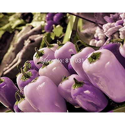 Hot selling 20pcs/bag purple Crystal pepper rare vegetable seed bonsai plant home garden : Everything Else