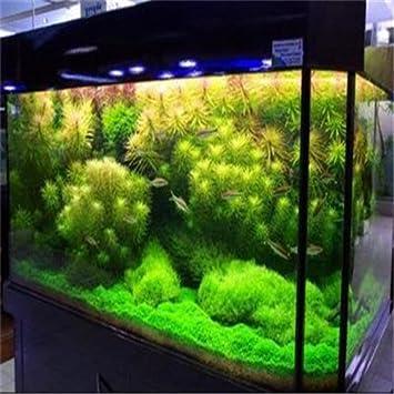 500pcs / jardín de plantas acuáticas coralinas bolso Semillas de hierba, agua rara, decoración del acuario decoración, Semillas Bonsai: Amazon.es: Jardín