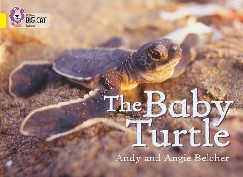 Read Online The Baby Turtle (Collins Big Cat) pdf epub