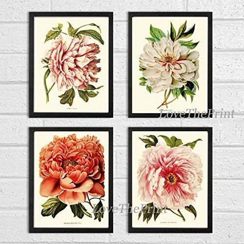 (Botanical Set of 4 Prints Antique Beautiful Large White Coral Peony Plants Flowers Illustration Home Room Decor Wall Art Unframed)