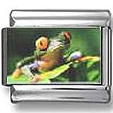 Frog Photo Italian Charm