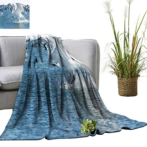 - YOYI Digital Printing Blanket Juvenile Trumpeter Swan Landing in The Water. Better Deeper Sleep 30