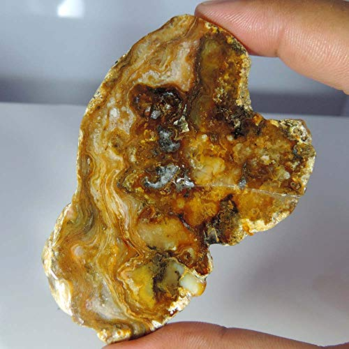 GEMSCREATIONS 225.50Cts.Rough Montana Agate for Cutting, Lapidary, SLABS, Display Specimen