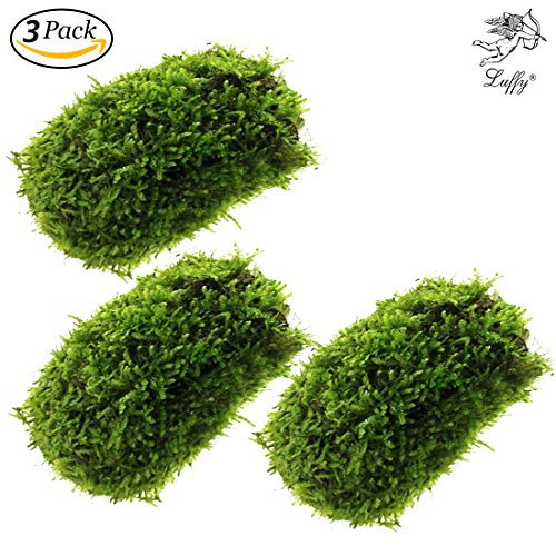 Luffy Coco Mini Moss – Builds a Beautiful and Natural Aquascape: Easy Care, Hardy and Long Lasting Plant: Filters and Provides Aquariums with Oxygen (Coco Mini Moss (3-Pack))