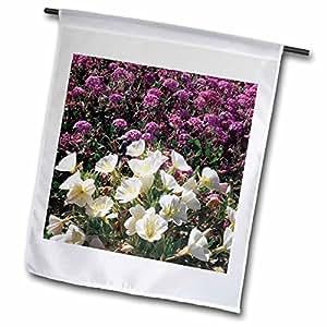 Danita Delimont–flores diseño de la bandera de Estados Unidos, California, Anza Borrego, Primrose y Verbena–banderas de flores silvestres
