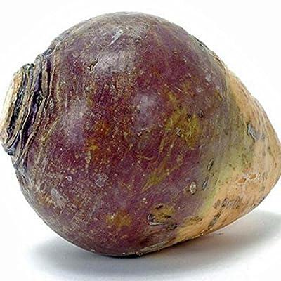 American Purple Top Rutabaga Seeds - 4.8 Grams : Vegetable Plants : Garden & Outdoor