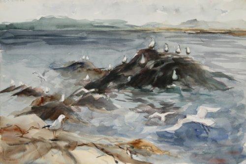 Rock Gull - Seagulls on Rocks (61)