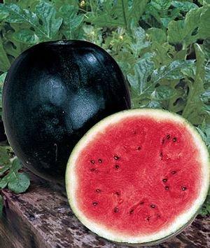Watermelon Seed Sugar Baby By Stonysoil Seed Company