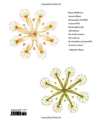 Spineless-Portraits-of-Marine-Invertebrates-the-Backbone-of-Life