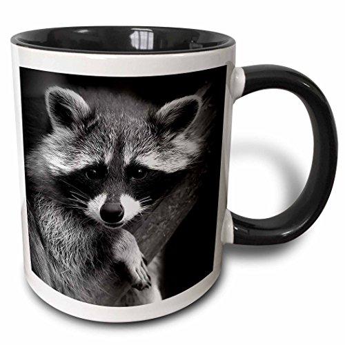 3dRose Raccoon black digital image
