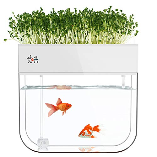 Huamuyu Hydroponic Garden Aquaponic Fish Tank Plants Growing System Self Cleaning Seed Sprouter Tray Buy Online In Serbia At Serbia Desertcart Com Productid 148045946
